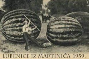 Čudovišne lubenice iz Martinića