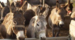 Otvaranje Muzeja magarca sa Centrom za posjetioce