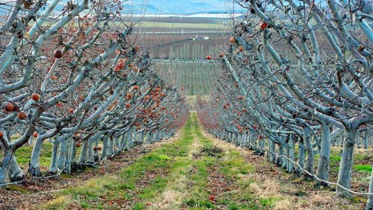 Jesenji radovi u voćnjaku